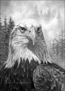 Portrait of an Heir-Bald Eagle