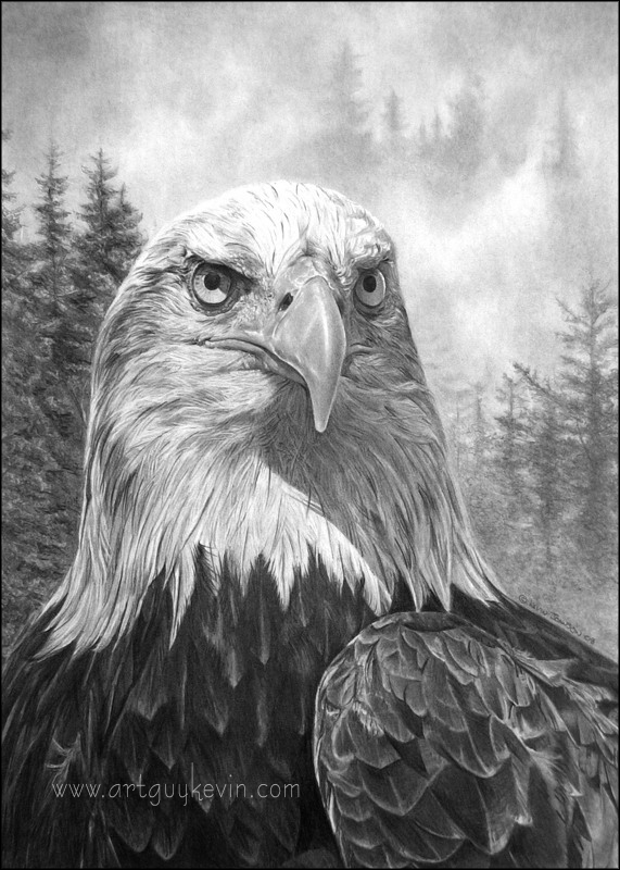 Portrait Of An Heir Bald Eagle By Deviant Art Guy On
