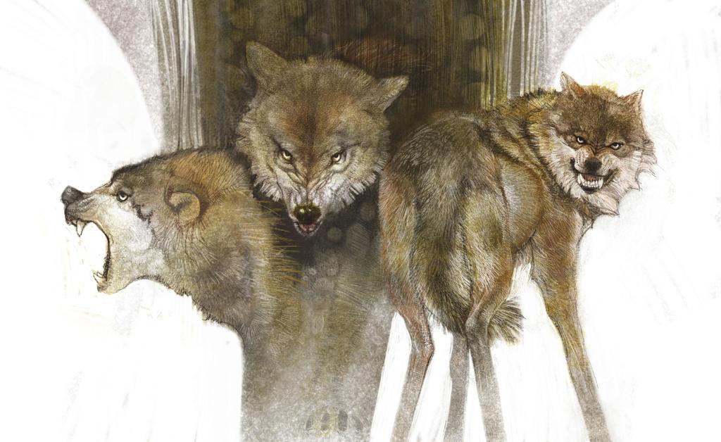 Wolf by KevinNichols