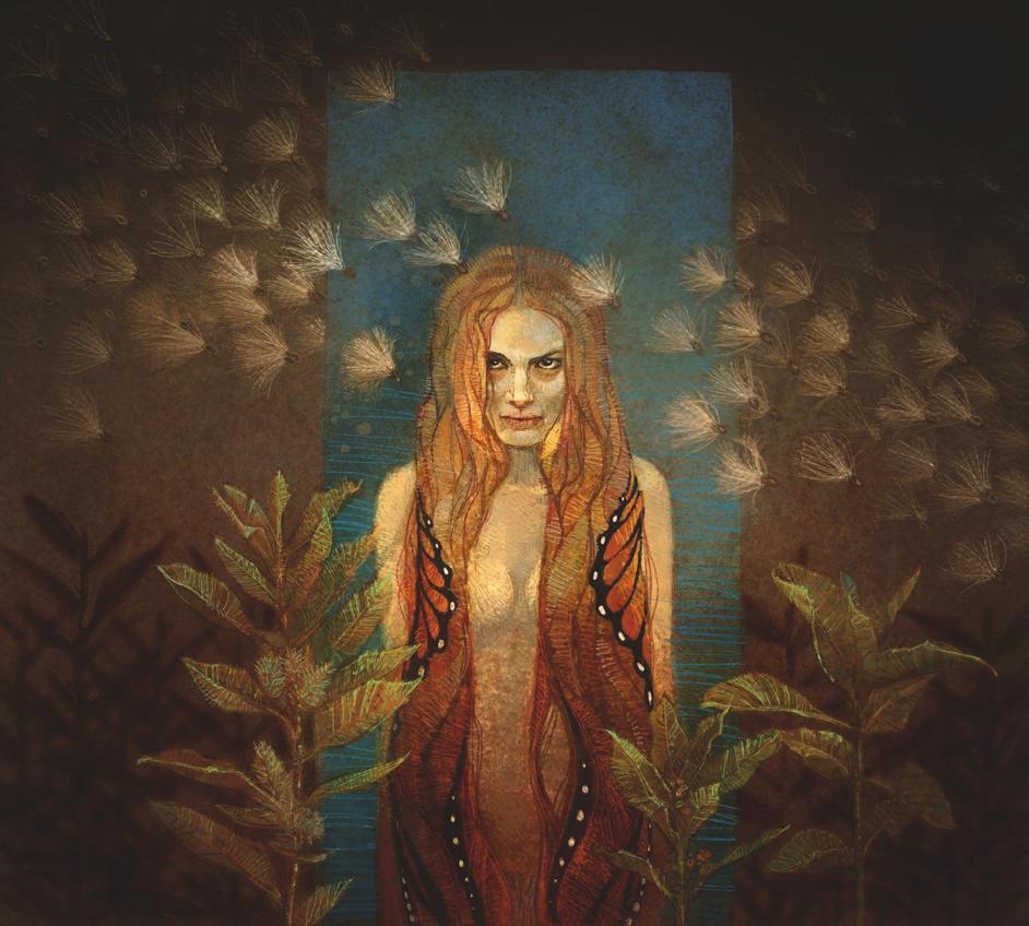 Monarchs & Milkweeds by KevinNichols