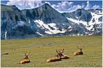 Alpine Meadow Sun Tan Party