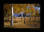 Autumn in Alluvial Fan
