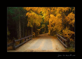 On The Pathway To Autumn by kkart