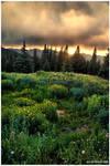 A Wildflower Sundown