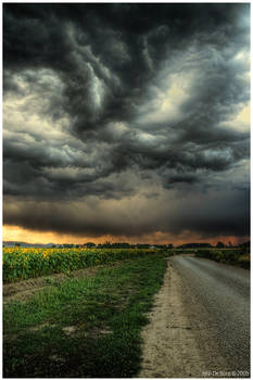 Sunflowers and Thunderstorms