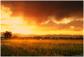 The Glow of A Sunflower Sunset by kkart