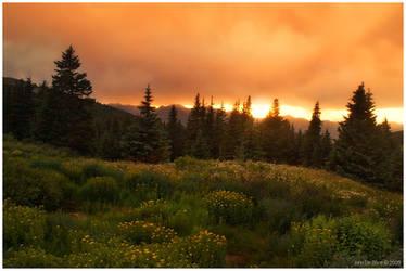 A Rainy Wildflower Sunset by kkart