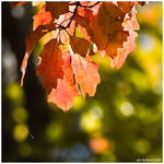 The Leaves Of Fall