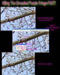 Killing dreaded purple fringe by kkart