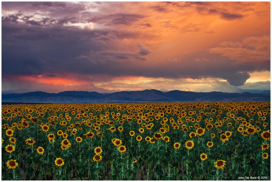 God's Sunflower Sky by kkart