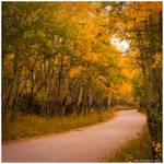 Autumn's Rural Route