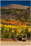 The Autumn Corral
