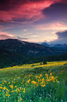 Alpine Sunflower Meadows