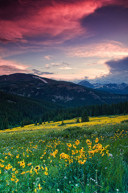 Alpine Sunflower Meadows by kkart