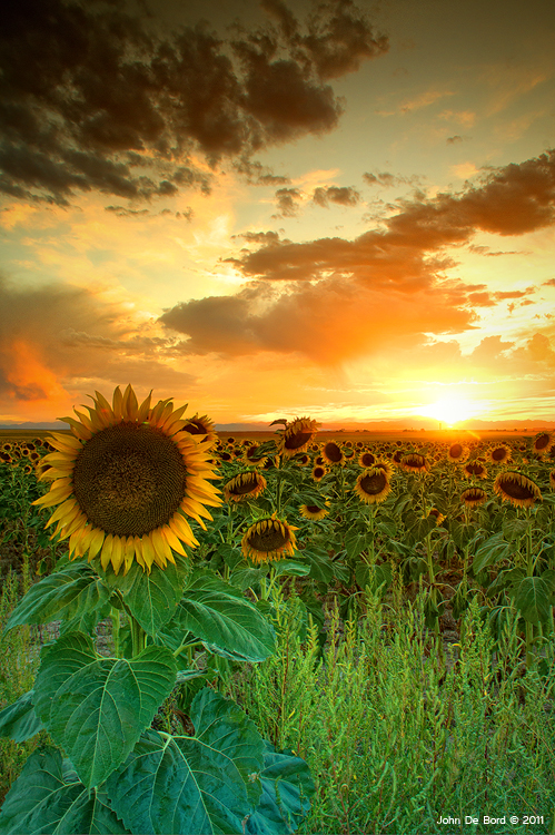 The Sunworshiper by kkart