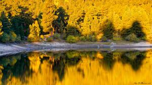 Autumn Golden Hour by kkart