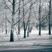 The Frozen Forest
