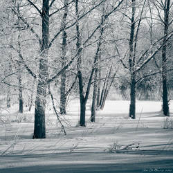 The Frozen Forest by kkart