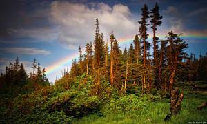 The Rainbow Forest