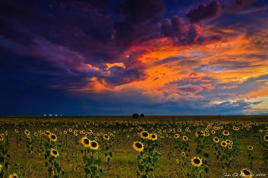 When Heaven Paints The Sky