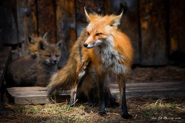 Mom and Young by kkart
