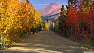 Country Road Of Color by kkart