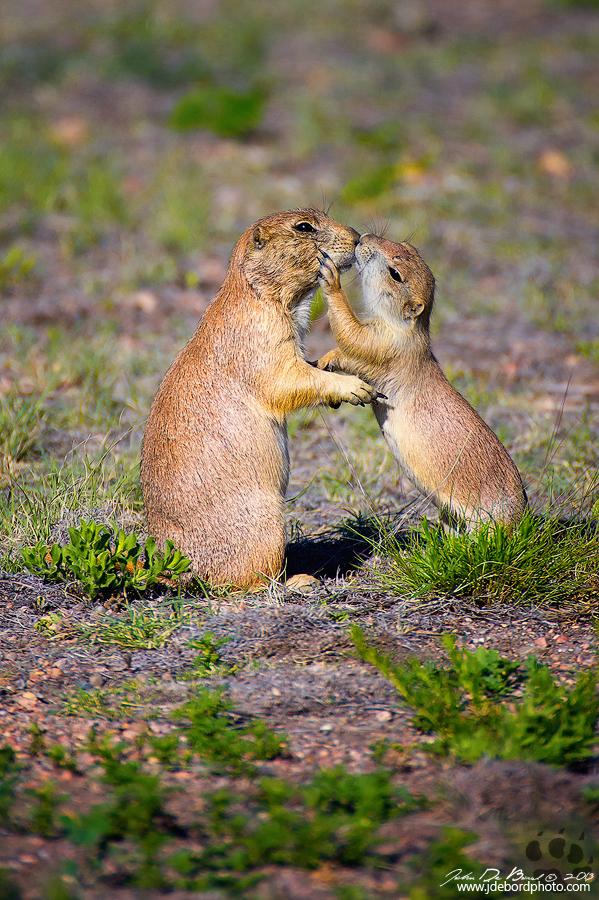 Kisses by kkart