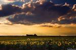 A Summer Evening Serenade by kkart