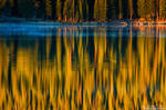 A Forest Reflection