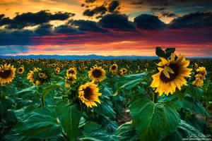 The Summer Winds by kkart