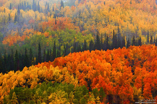 Fall In The Gunnison National Forest