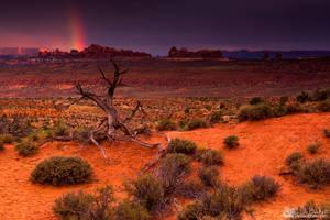 Light Of The Desert by kkart