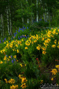 Wildflowers Of Crested Butte