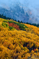 Fog And Fall In Colorado by kkart