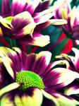 Each flower