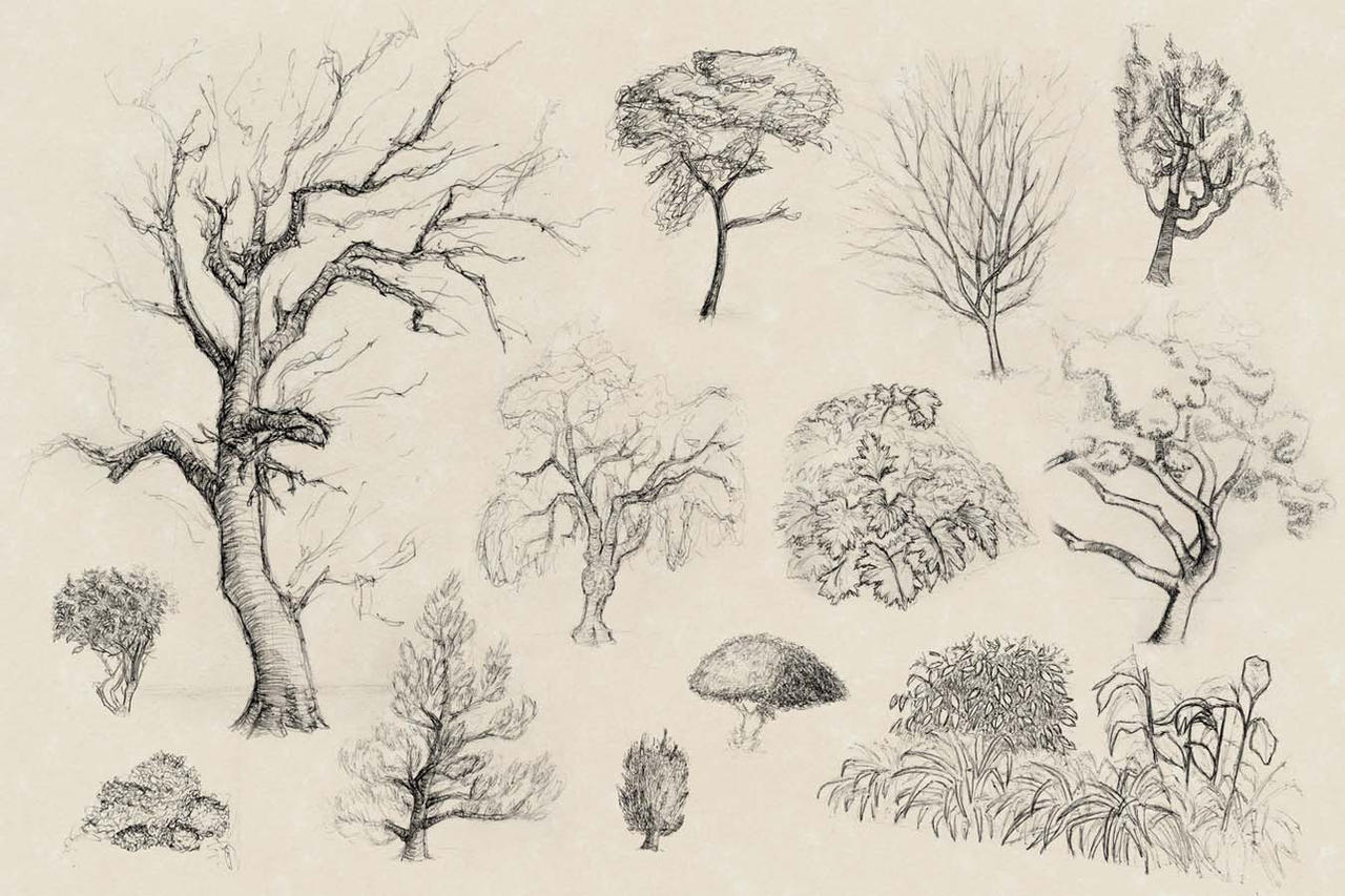 Tree and Shrub Sketches 1 by ElusiveAfflatus