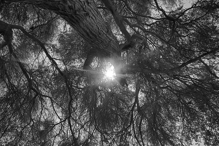 Piercing light down the Old Tree by Noora7at