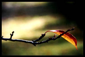 leaf by tolly