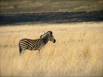 On the plains of Africa by BrightOctober