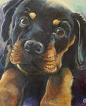 Rottweiler puppy commission