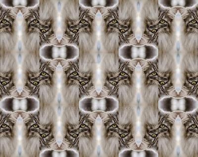 Fur of the Cat by Aqeel-Iraq