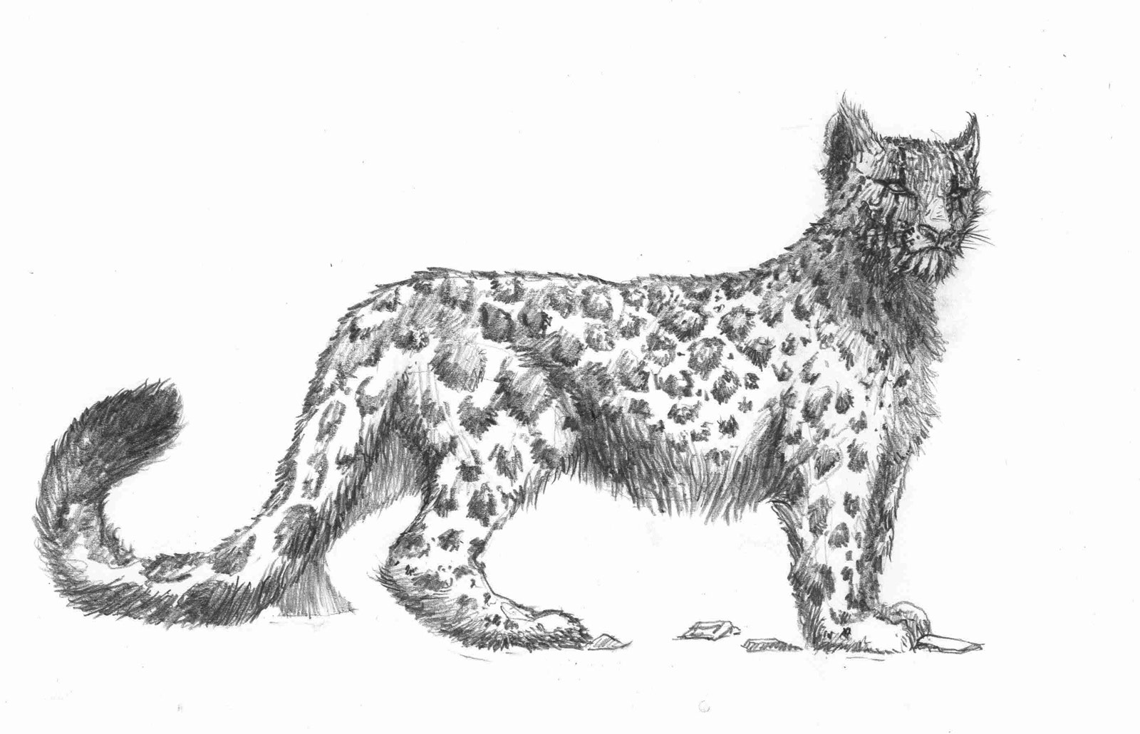 Snow leopard drawing - photo#18