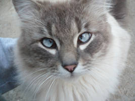 my funny cat by SplinterKid