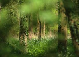 Bois en fleurs by Euphoria59