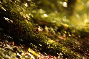 Bois by Euphoria59