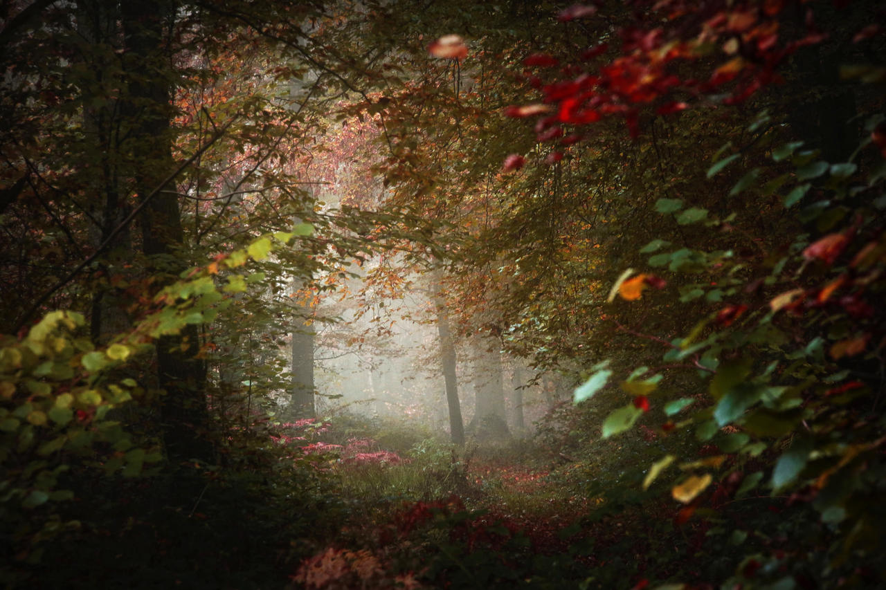 In forest by Euphoria59