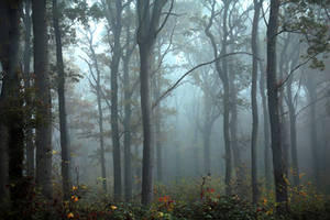 Brouillard by Euphoria59