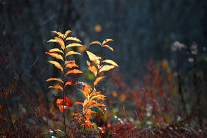 Vegetation by Euphoria59