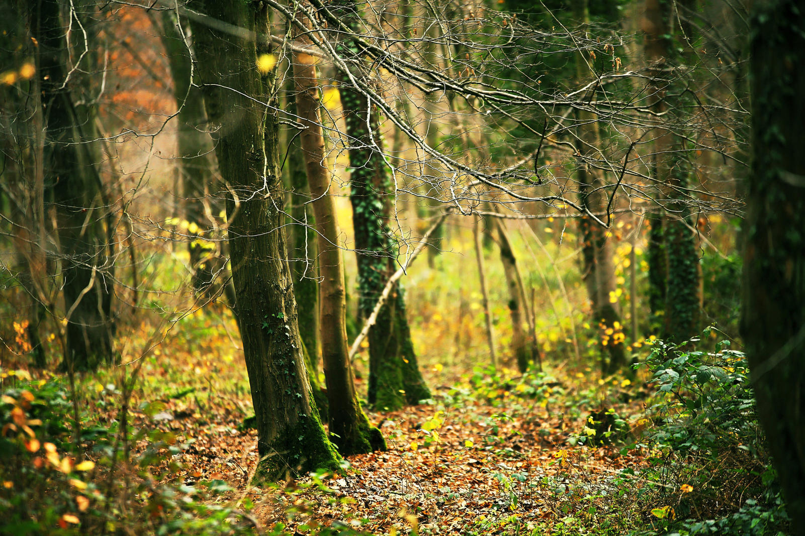 About Us - Better Place Forests