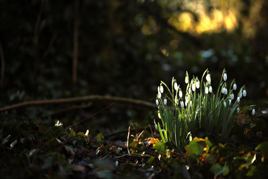 Premieres fleurs by Euphoria59